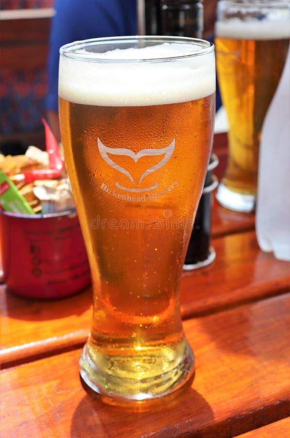 Cerveja refrigerando no calor do verão fotos de stock