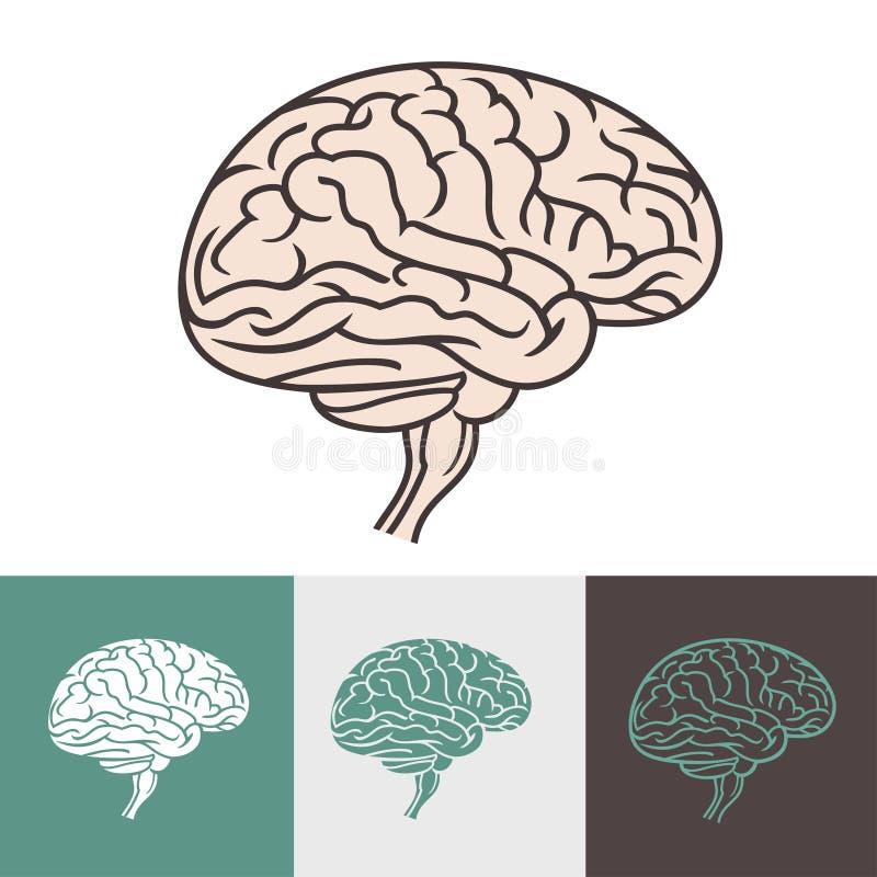 cervello illustrazione di stock