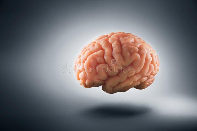 Cervello che galleggia su un fondo/concetto grigi di pensieri immagini stock libere da diritti