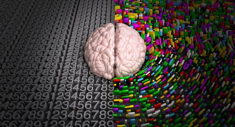 Cervello di sinistra & cervello di destra fotografia stock