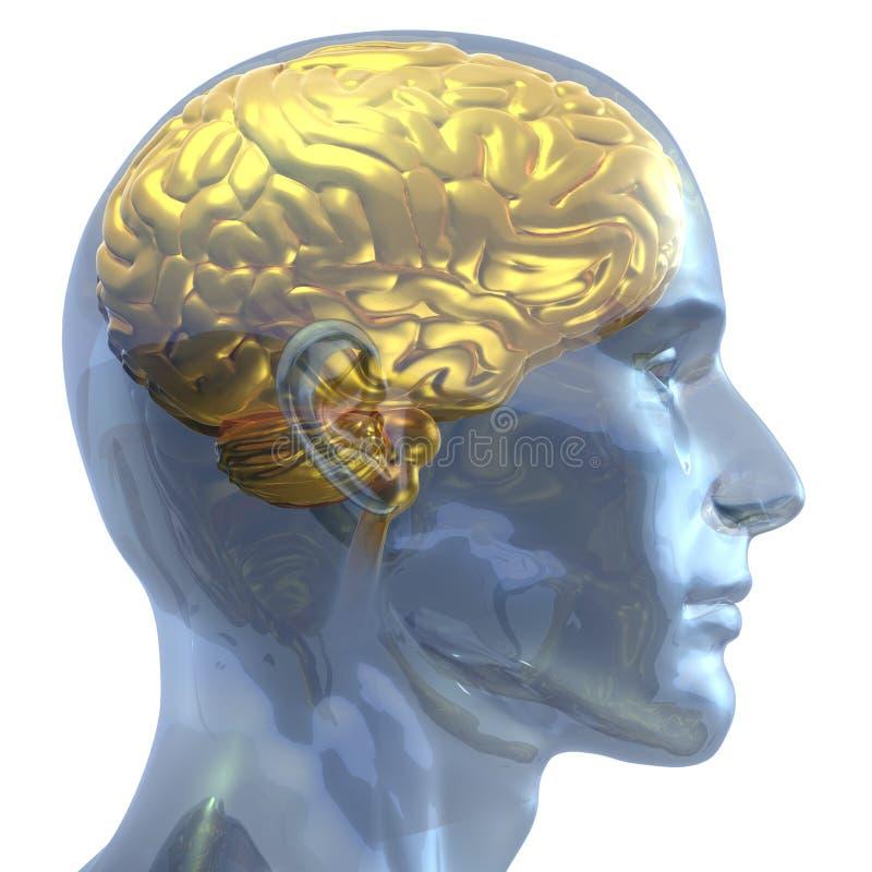 cervello dorato illustrazione vettoriale