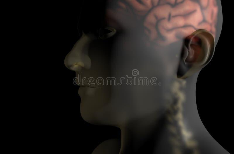 Cervello e spina dorsale obliqui nell'ente trasparente royalty illustrazione gratis