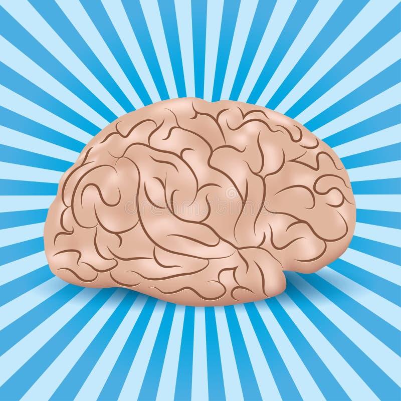Cervello sano su un fondo blu con le righe illustrazione di stock