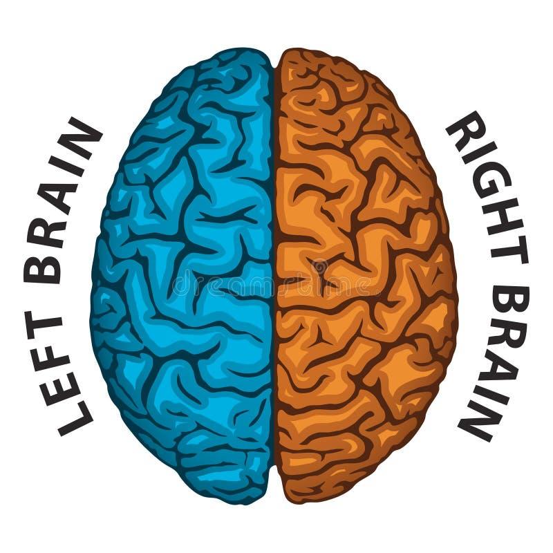 Cervello sinistro, cervello giusto illustrazione vettoriale