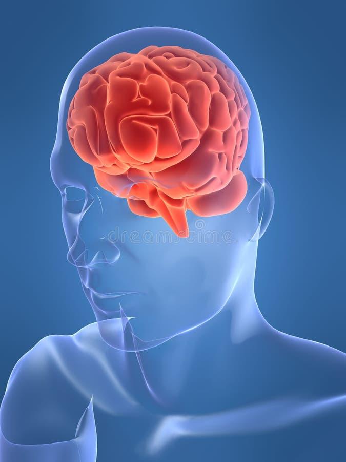 Cervello umano royalty illustrazione gratis
