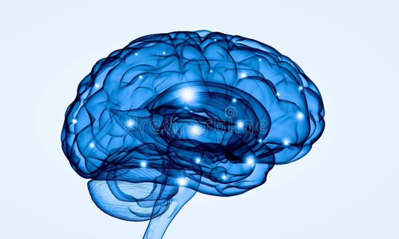 Cervello umano illustrazione di stock