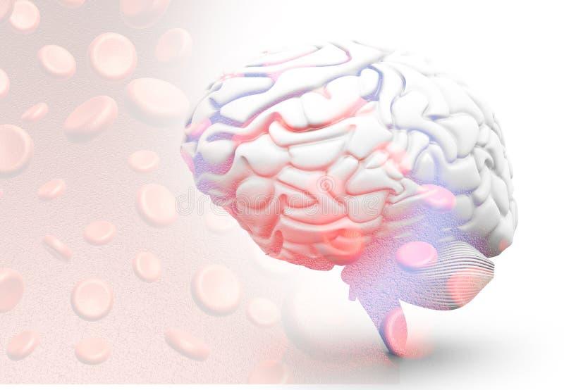 Cervello umano con i globuli royalty illustrazione gratis