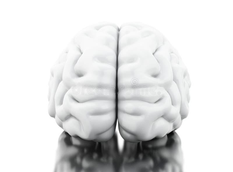 cervello umano 3D Concetto di anatomia di scienza royalty illustrazione gratis