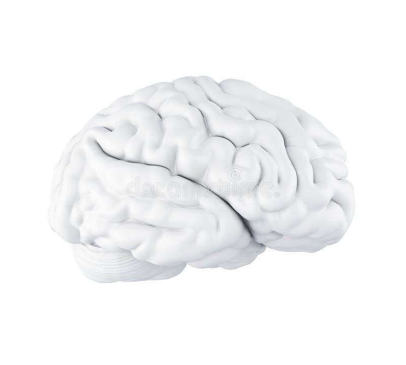 cervello umano 3D illustrazione vettoriale