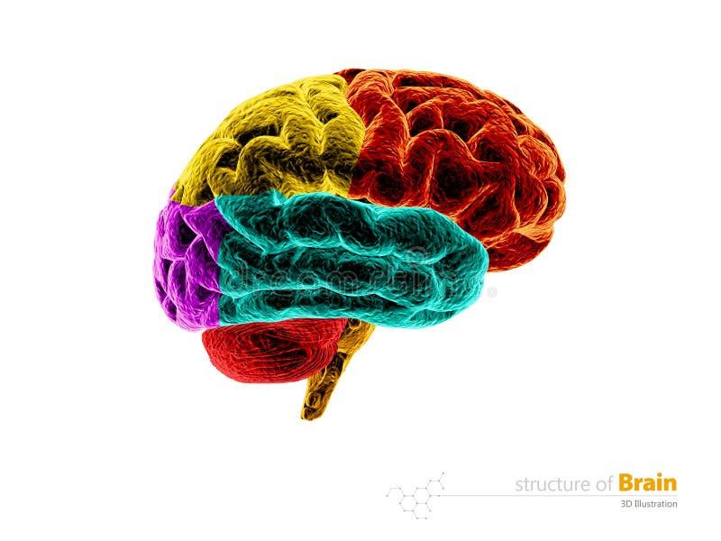 Cervello umano, struttura di anatomia Illustrazione di anatomia 3d del cervello umano Bianco isolato royalty illustrazione gratis