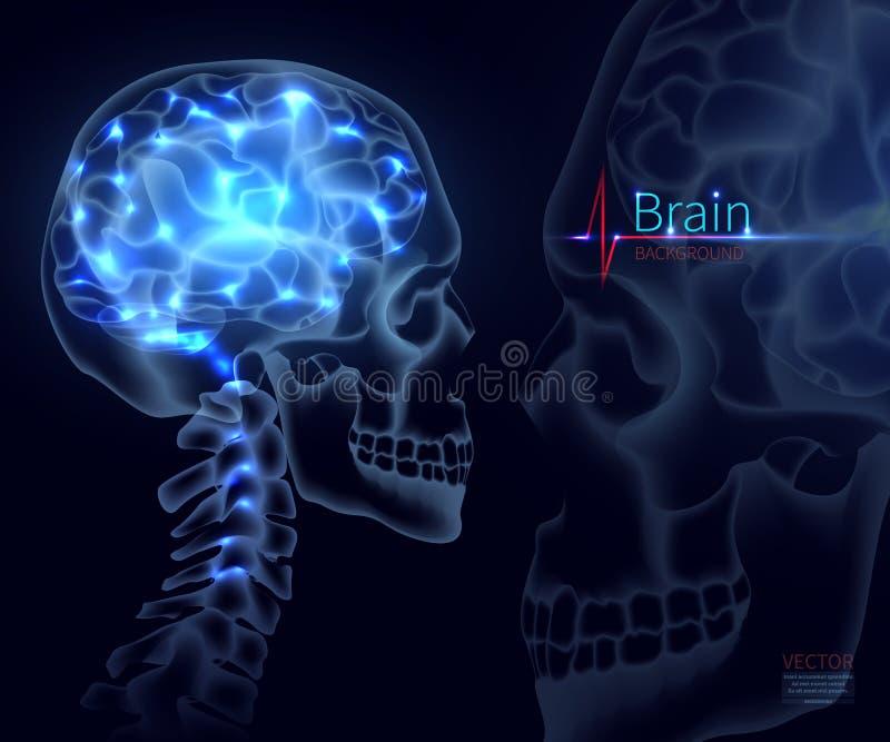 Cervello, vettore per medicina Un colpo del cranio, le reti neurali del cervello, dell'attività di cervello e della prestazione, illustrazione di stock