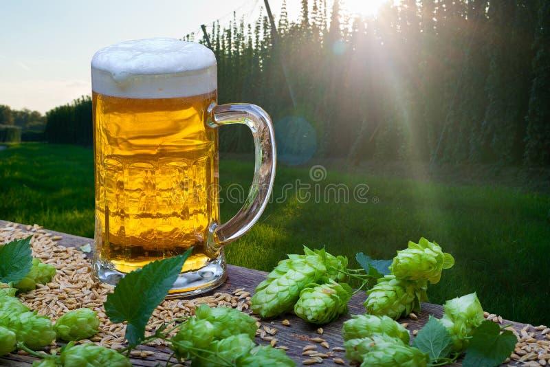 Cerveza Glas con los conos de salto fotografía de archivo libre de regalías
