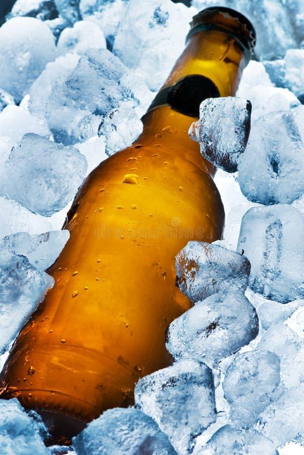 Cerveza helada fotografía de archivo libre de regalías
