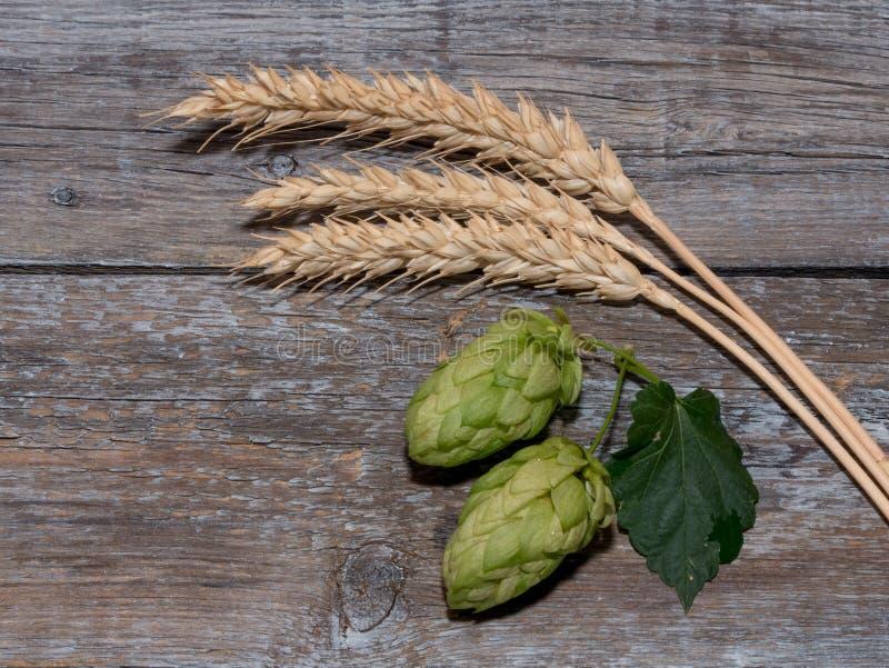 Cerveza que elabora los conos de salto de los ingredientes en oído del tablero de madera y del trigo foto de archivo