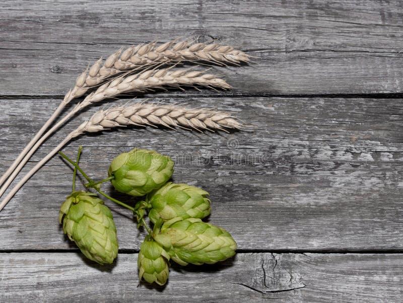 Cerveza que elabora los conos de salto de los ingredientes en oído del tablero de madera y del trigo imágenes de archivo libres de regalías