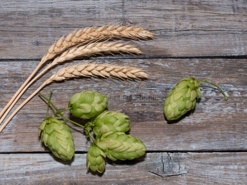 Cerveza que elabora los conos de salto de los ingredientes en oído del tablero de madera y del trigo imagen de archivo libre de regalías