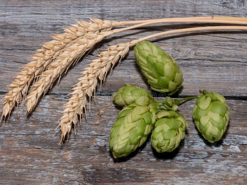 Cerveza que elabora los conos de salto de los ingredientes en oído del tablero de madera y del trigo imagen de archivo