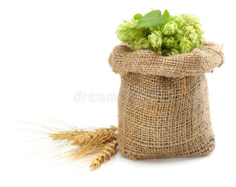Cerveza que elabora los conos de salto de los ingredientes en los oídos del saco y del trigo aislados en el fondo blanco Concepto fotos de archivo libres de regalías