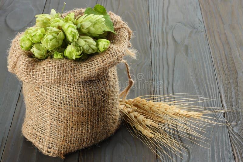 Cerveza que elabora los conos de salto de los ingredientes en oídos del saco y del trigo en fondo de madera oscuro Concepto de la foto de archivo libre de regalías