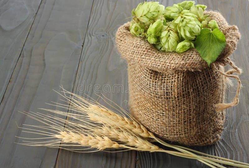 Cerveza que elabora los conos de salto de los ingredientes en oídos del saco y del trigo en fondo de madera oscuro Concepto de la imagen de archivo