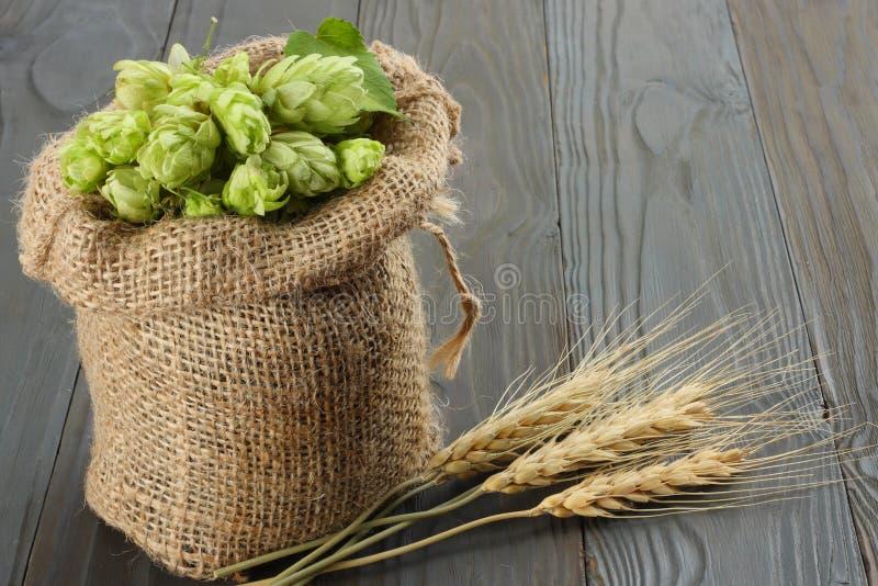 Cerveza que elabora los conos de salto de los ingredientes en oídos del saco y del trigo en fondo de madera oscuro Concepto de la fotografía de archivo libre de regalías
