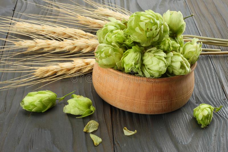 Cerveza que elabora los conos de salto de los ingredientes y los oídos del trigo en la tabla de madera oscura Concepto de la cerv imagenes de archivo