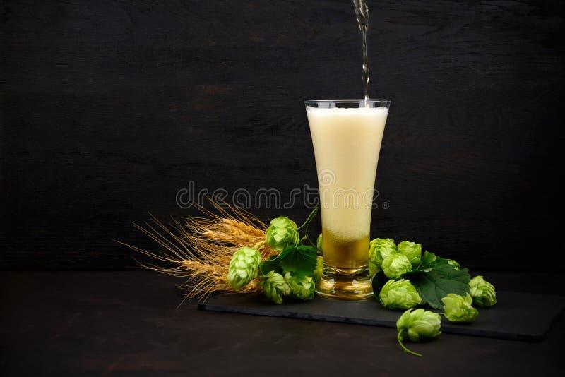 Cerveza que vierte en un vidrio Vidrio de cerveza con los saltos y los oídos verdes del trigo en la tabla de madera oscura Todaví imagenes de archivo
