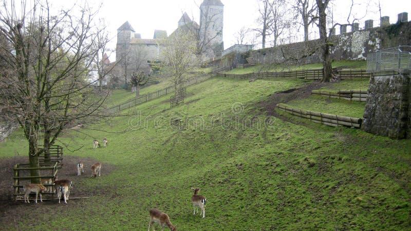 Cervi in castello fotografia stock