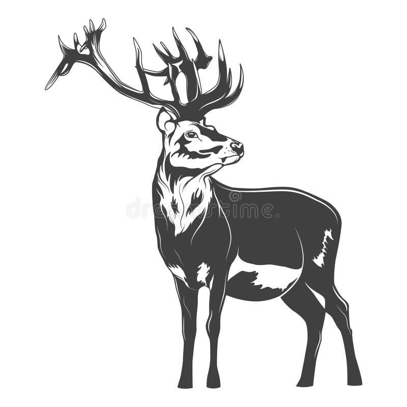 Cervi di vettore illustrazione di stock
