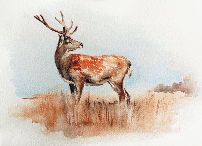Cervi nell'illustrazione dell'acquerello del campo illustrazione vettoriale