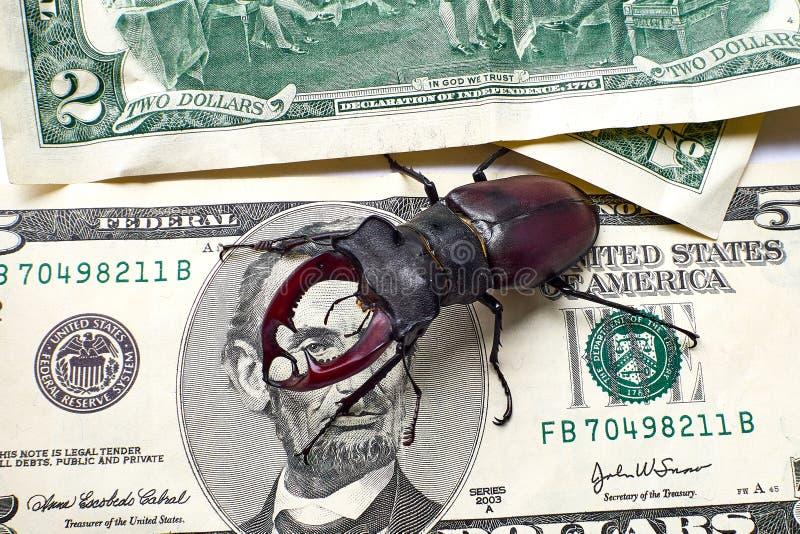 Cervo di Lucanus dello scarabeo dei cervi su cinque dollari americani Lincoln esamina lo scarabeo con un occhio Concetto dello sc fotografia stock libera da diritti
