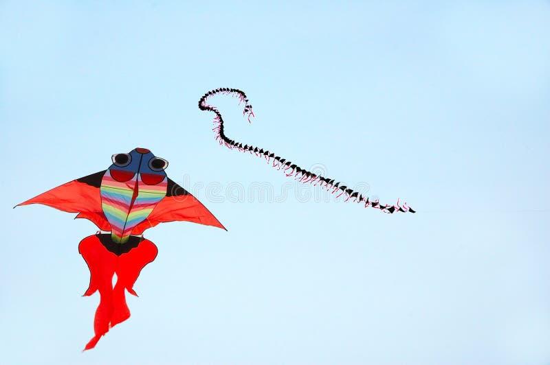 Cervo volante fotografie stock