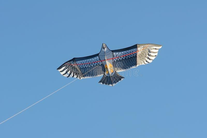 Cervo volante del falco fotografie stock