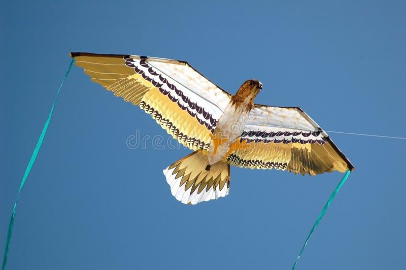 Cervo volante dell'aquila fotografia stock