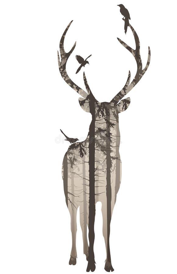 Cervos 2