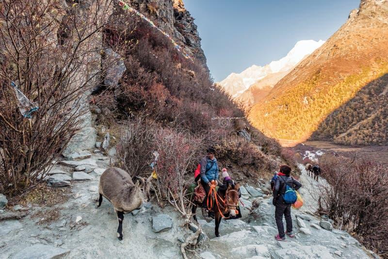 Cervos da montanha com o cavalo de montada tibetano no vale rochoso em Yading fotos de stock