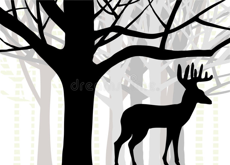 Cervos da quantia choruda ou de whitetail que estão na floresta de árvores do carvalho e de vidoeiro ilustração stock