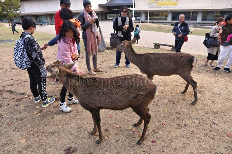 Cervos de alimentação de Nara fotografia de stock
