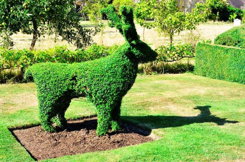 Cervos do Topiary de um jardim inglês fotografia de stock