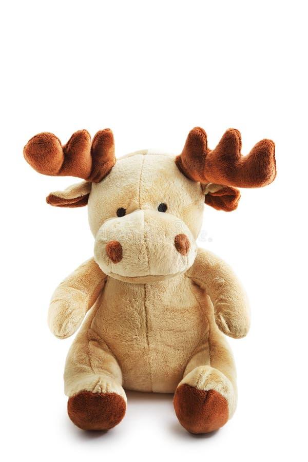 Cervos dos alces foto de stock royalty free