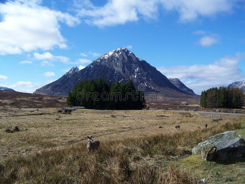 Cervos e montanhas em Escócia imagens de stock