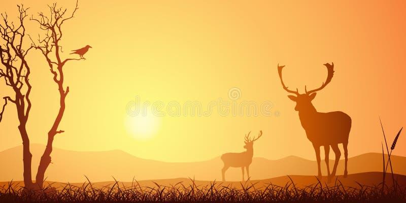 Cervos masculinos do veado ilustração royalty free
