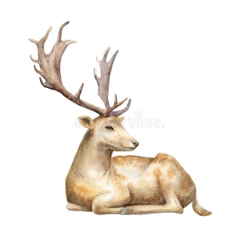 Cervos masculinos Ilustração da aguarela Fundo isolado ilustração royalty free
