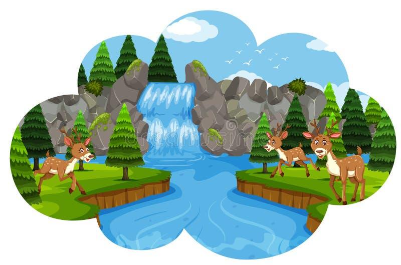 Cervos na cachoeira ilustração stock