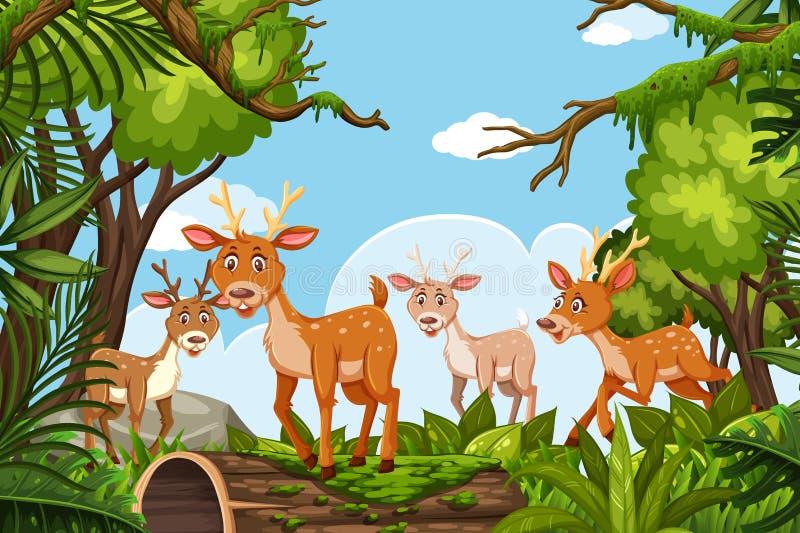 Cervos na cena da selva ilustração royalty free