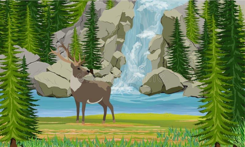 Cervos na costa de um lago da montanha Cachoeira, rochas e árvores do abeto vermelho ilustração stock