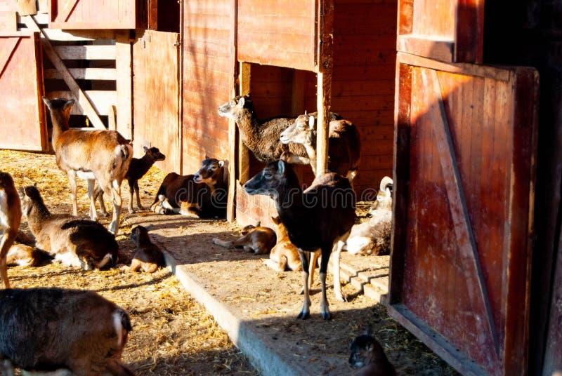 Cervos no jardim zoológico foto de stock royalty free