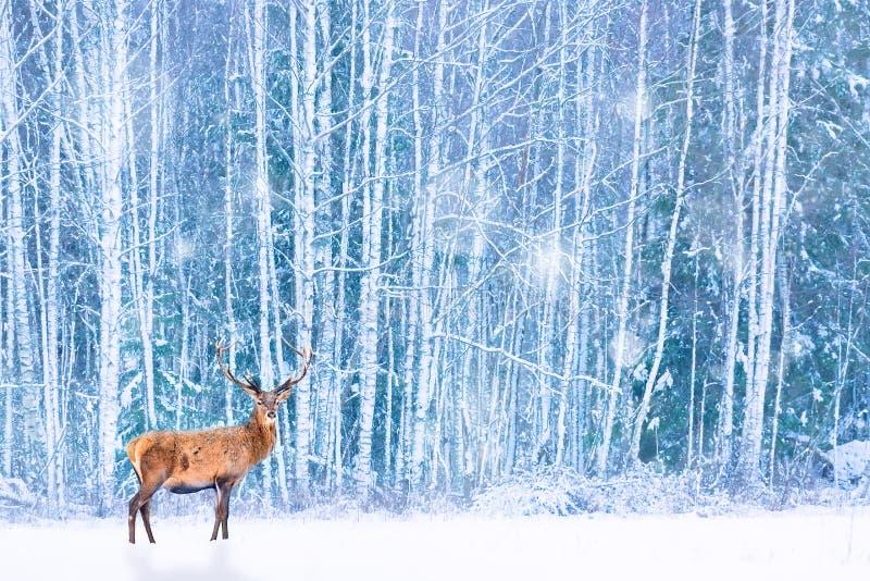 Cervos nobres contra o Natal feericamente artístico da floresta nevado do inverno Imagem sazonal do inverno fotos de stock