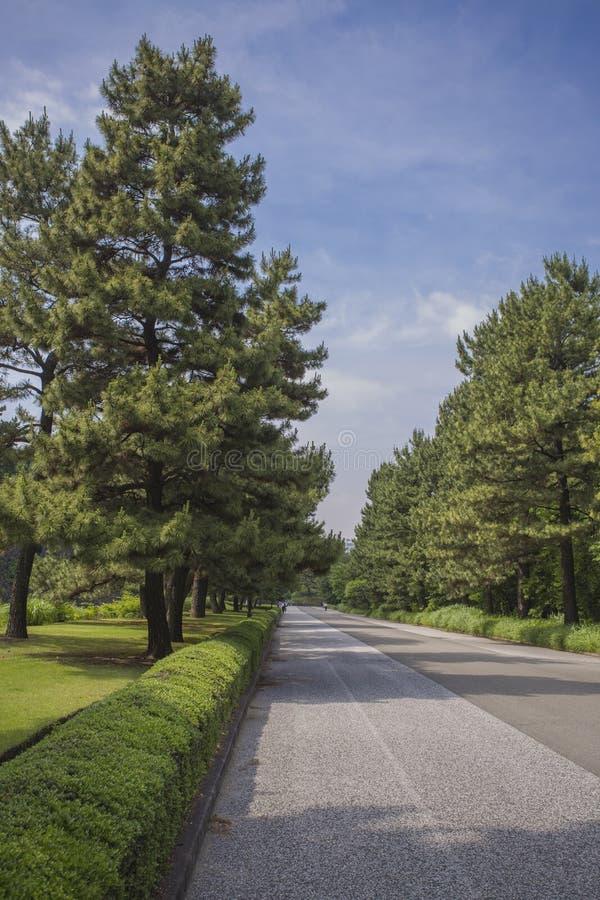 Cesarski pałac park, Tokio, Japonia obrazy royalty free