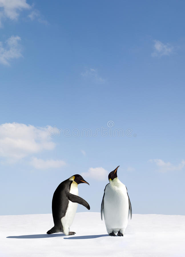 cesarzów pingwiny zdjęcia stock